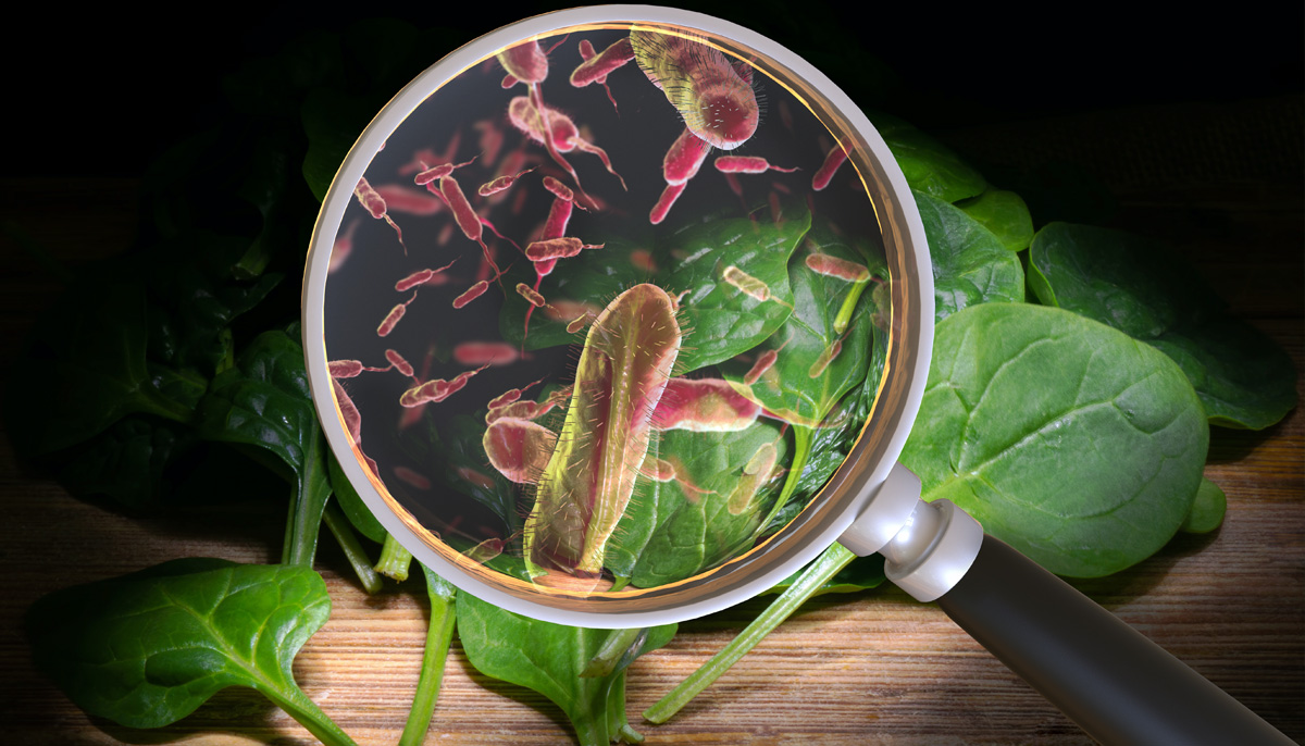 Listeria Outbreak in Your Fridge