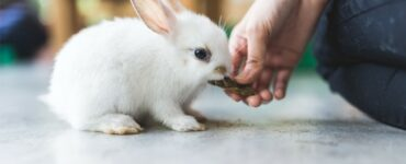 a small white rabbit being hand fed